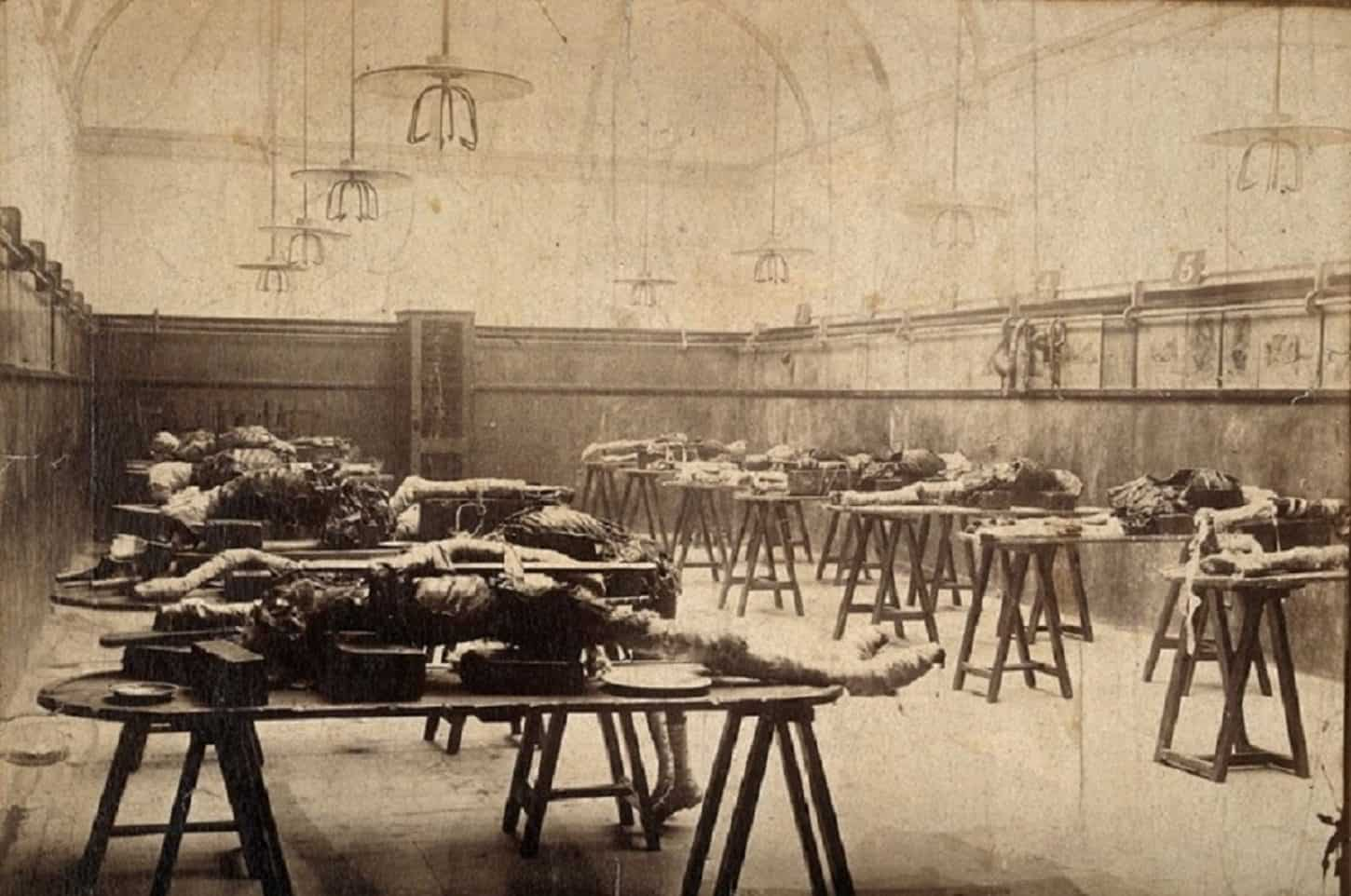 The interior of a hospital dissecting room in London, with lines of cadavers on benches